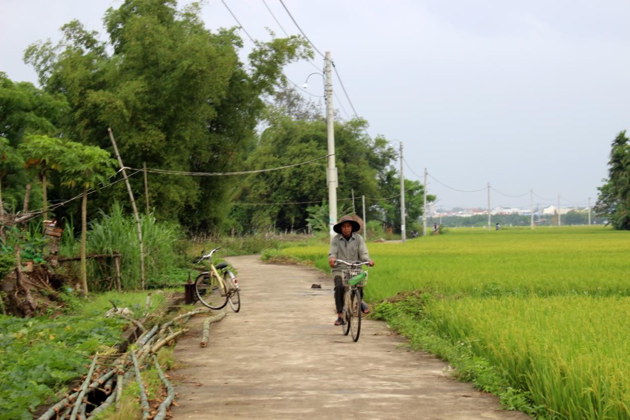 Wioski w okolicy Hoi An, przepiękne pola ryżowe i mnóstwo rowerzystów, Wietnam 2019 r.