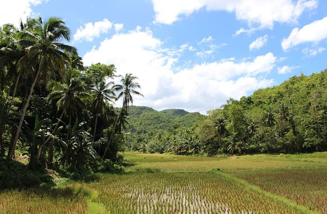 Wietnam plan wyjazdu - Pola ryżowe na Filipinach