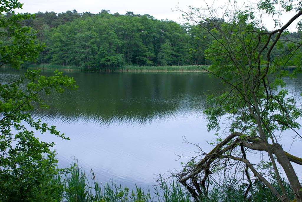 Rezerwat Buki nad Jeziorem Lutomskim