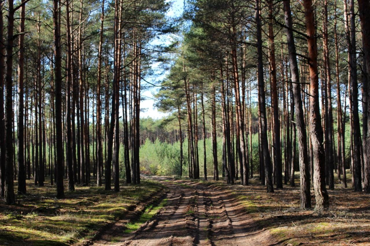 Przepiękny las i kolory. Puszcza Notecka