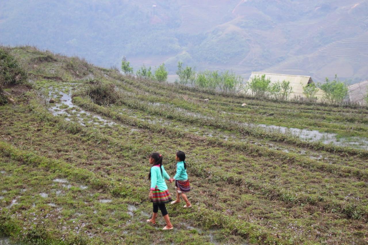 Wietnam pola ryżowe w marcu.