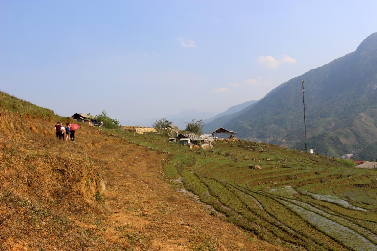 Pola ryżowe w pobliżu domu Tom Tom, okolice Sa Pa, Wietnam Północny.