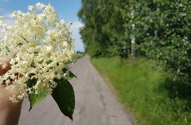 Sok z kwiatów czarnego bzu